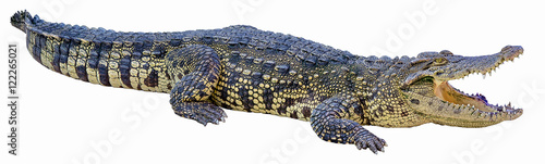 Foto op Aluminium Krokodil Crocodile on a white background.