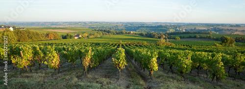 Papiers peints Blanc Vigne en Anjou