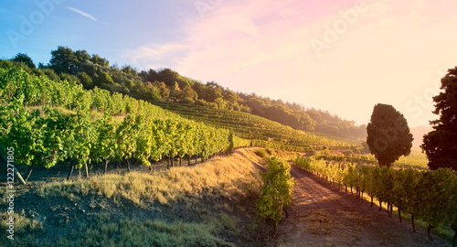 Poster Wijngaard Lumière dans les vignes en France