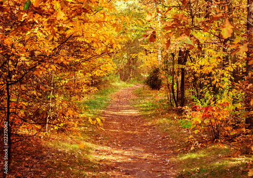Stickers pour porte Orange eclat path in fall park with golden leaves at day, retro toned
