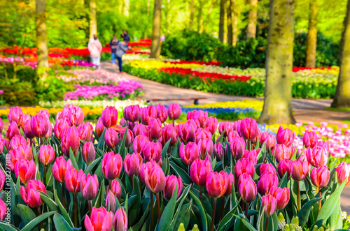 Blooming flowers in Keukenhof park in Netherlands, Europe. Wallpaper Mural