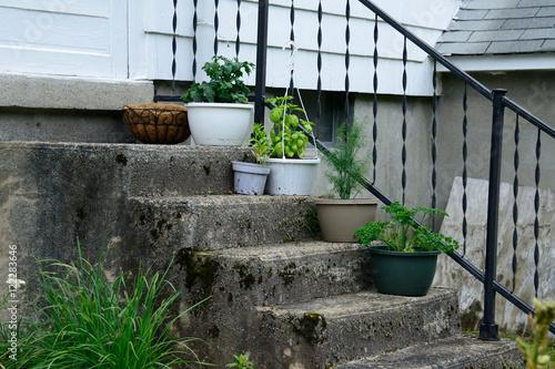 Fotografie, Obraz  Herbs on the Stoop