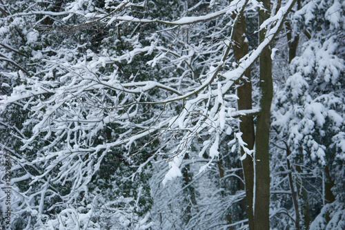 Aluminium Prints Dark grey Winter