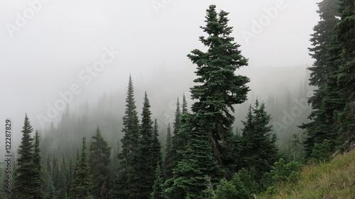 Vászonkép  Trees and fog