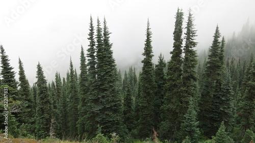 Trees and fog Tapéta, Fotótapéta