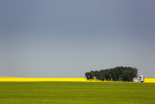 A Flowering Canola Field In The Distance Framed By A Green Wheat Field With A Group Of Trees, Metal Grain Bins And Blue Sky, Acme, Alberta, Canada