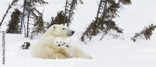Spoed Fotobehang Ijsbeer polar bear with cubs
