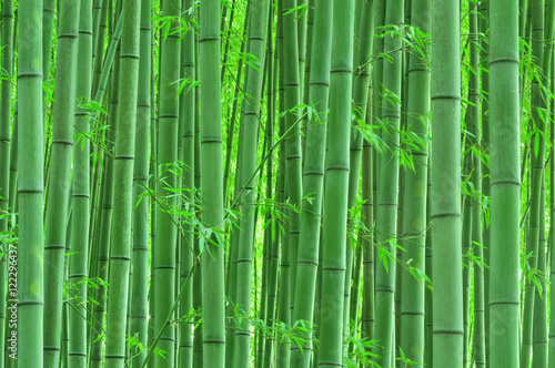 Foto op Canvas Bamboo 静寂の竹林