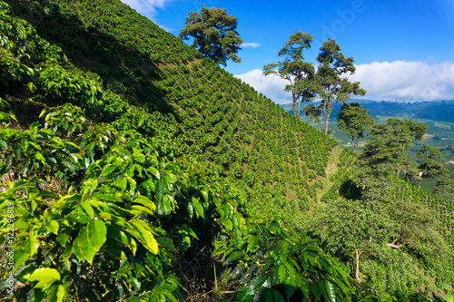 Photo  Dramatic Coffee Landscape