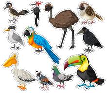 Sticker Set With Many Birds