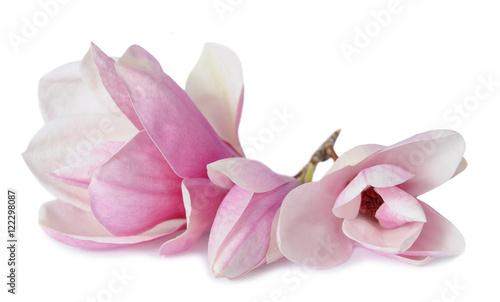 Foto op Plexiglas Magnolia magnolia flowers