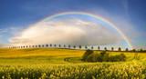 Fototapeta Tęcza - Tęcza nad wiosennym polu