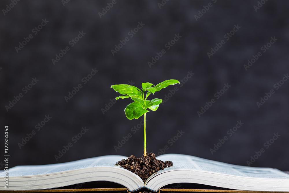 Fototapety, obrazy: 本と植物