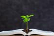 Leinwandbild Motiv 本と植物