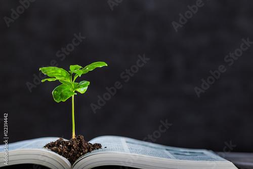 Fotografía 本と植物