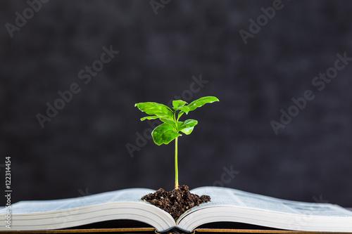 本と植物 Fototapete