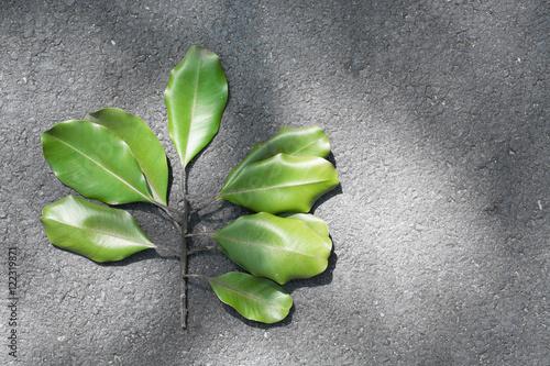 Fototapeta Leaf obraz na płótnie