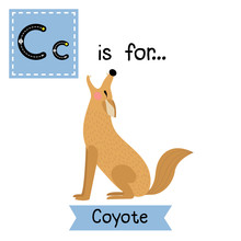 C Letter Tracing. Howling Coyote. Cute Children Zoo Alphabet Flash Card. Funny Cartoon Animal. Kids Abc Education. Learning English Vocabulary. Vector Illustration.