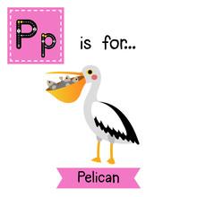 P Letter Tracing. Pelican Bird...