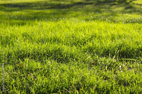 Montage in der Fensternische Gras Green grass background