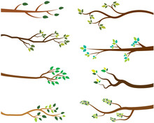 Vector Set Of Tree Branches Wi...
