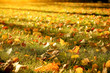 colorful autumn lleaves on fresh green grass. natural background