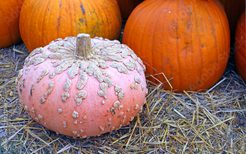 Fotografía  bumpy gourd