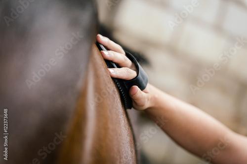 Foto auf AluDibond Pferde Nahaufnahme, Frau striegelt ihr braunes Pferd