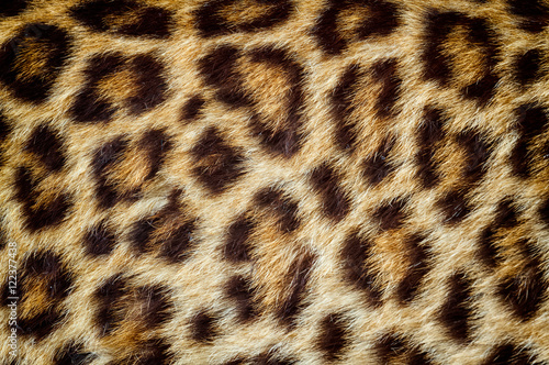 Poster Leopard Real jaguar skin for background and texture