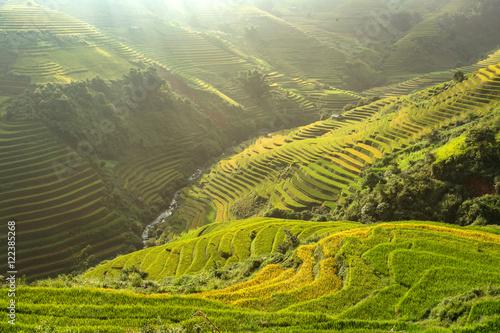 Garden Poster Rice fields Mu Cang Chai en Bai,Vietnam