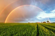 Rainbow Rural Landscape With Wheat Field On Sunset