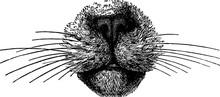 Vintage Illustration Nose Cat