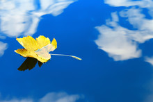 Autumn Leaf Floating On Water Reflection Of The Blue Sky And White Clouds