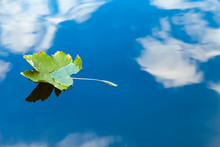 Autumn Leaf Floating On Water ...