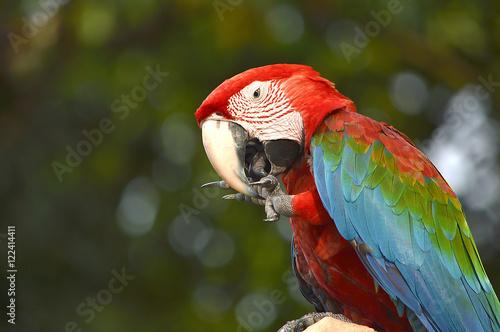 Photo Macaw