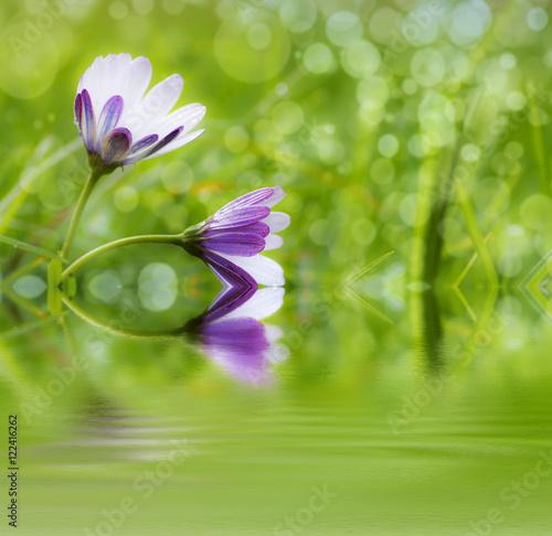 Foto  belleza natural