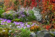 Flowerbed In Autumn Season. Co...