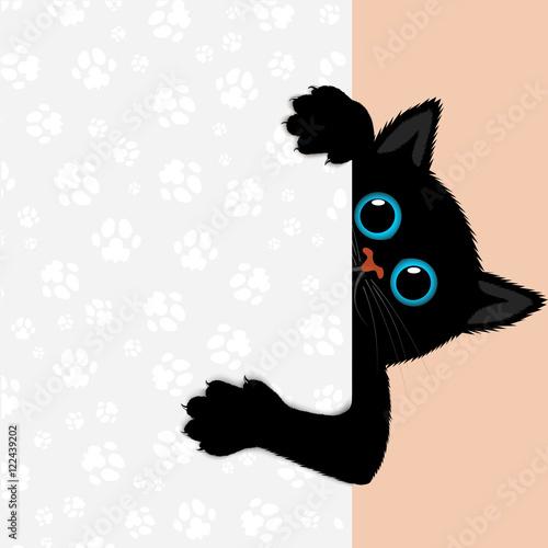 Fototapeta playful kitten represents a banner