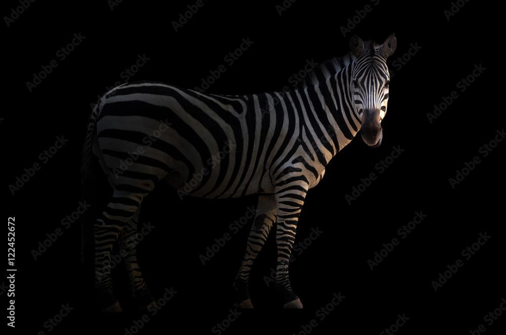 Fototapety, obrazy: zebra in the dark