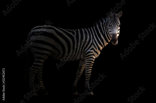 Photo Stands Zebra zebra in the dark