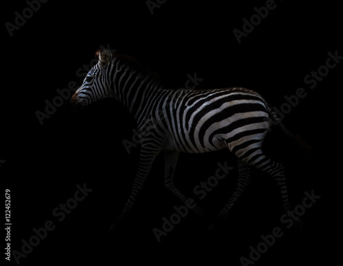 Aluminium Prints Zebra zebra in the dark