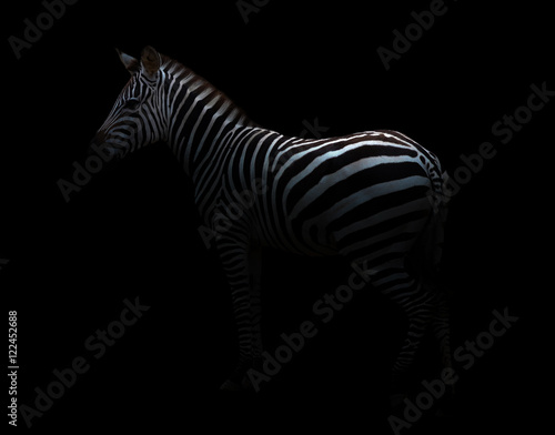 Poster de jardin Zebra zebra in the dark