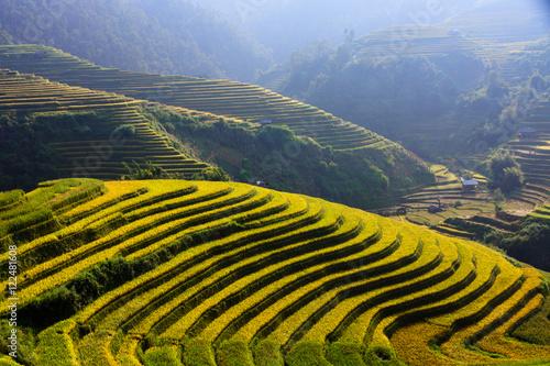Fotobehang Rijstvelden Rice fields on terraced in Northwest of Vietnam.