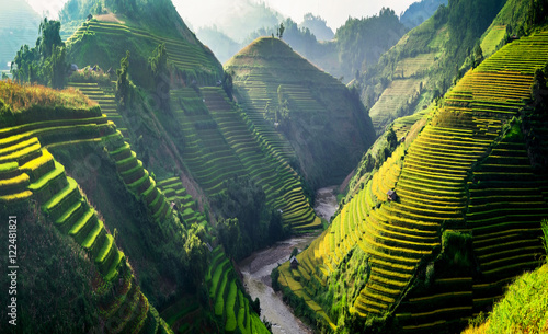 Fotobehang Bali Rice fields on terraced in Northwest of Vietnam.
