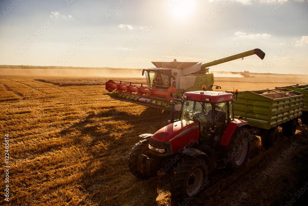 Fototapety, obrazy: Harvesting the wheat