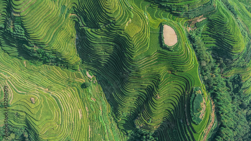 Fotoposter Rijstvelden Top view or aerial shot of fresh green and yellow rice fields.Longsheng or Longji Rice Terrace in Ping An Village, Longsheng County, China.