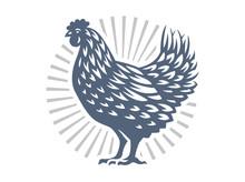 Beautiful Chicken Illustration On White Background