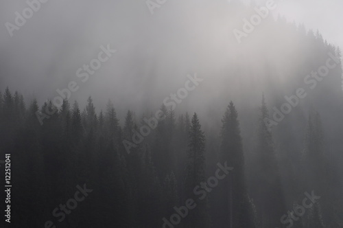 Fototapety, obrazy: Foggy Morning Forest in Carpathians