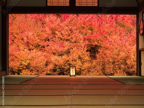 Foto op Canvas Baksteen 紅葉の秋