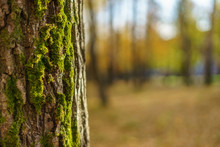 The Tree Trunk Covered With Moss